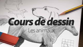 Cours de dessin : Apprendre à dessiner les animaux